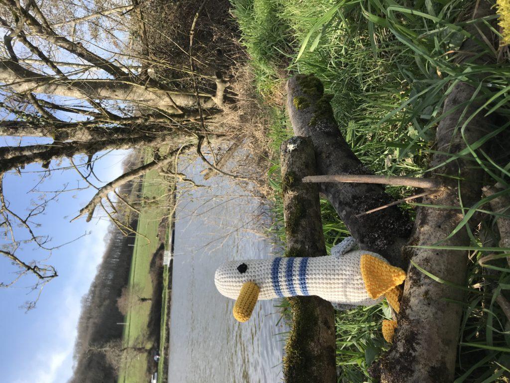 mouette à la rivière